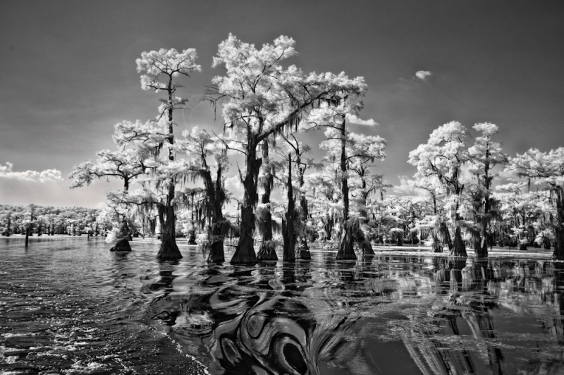 Caddo Lake Lilypads