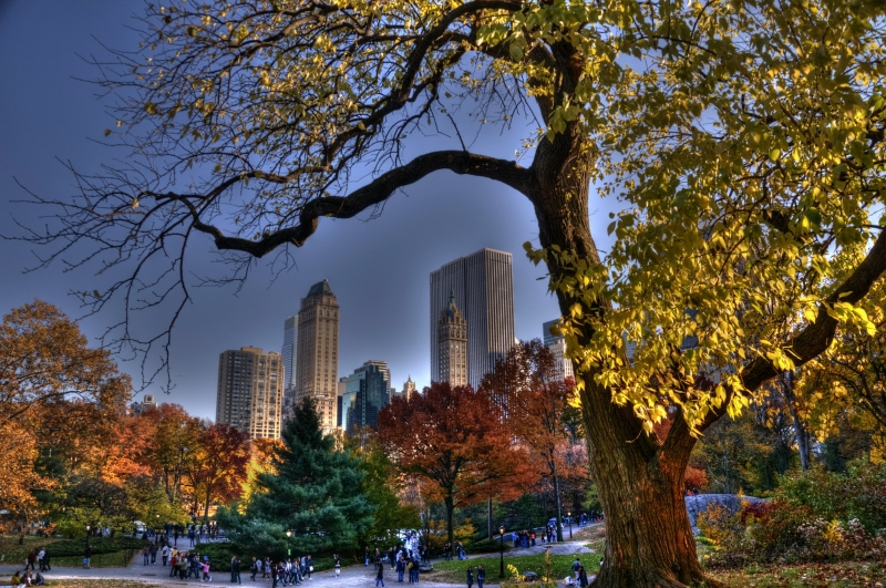 Fall In City