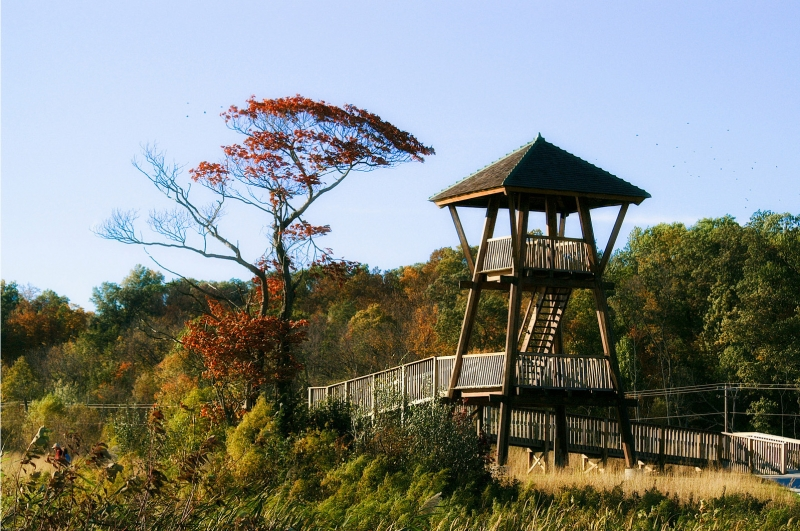 Tower At Heron Pond