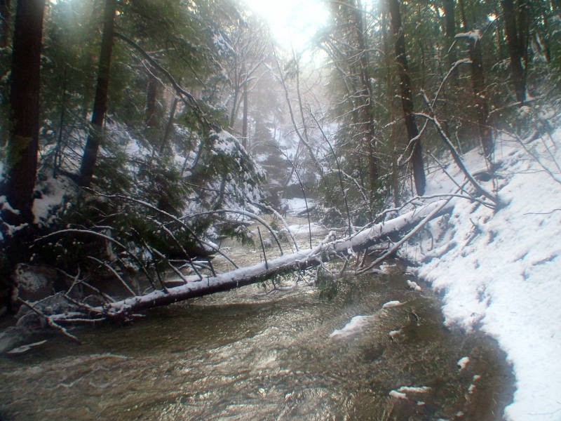 Winter Hike In The Gulch