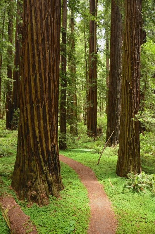 Grizzly Creek Redwoods