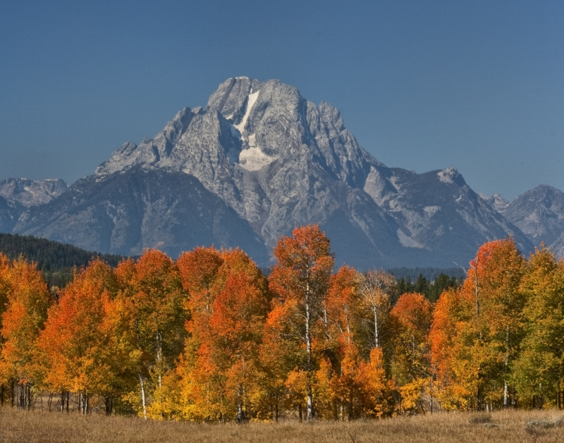 Fall Colors In The Tetons