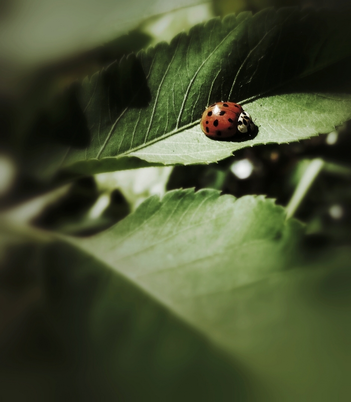 Lonely Lady Bug