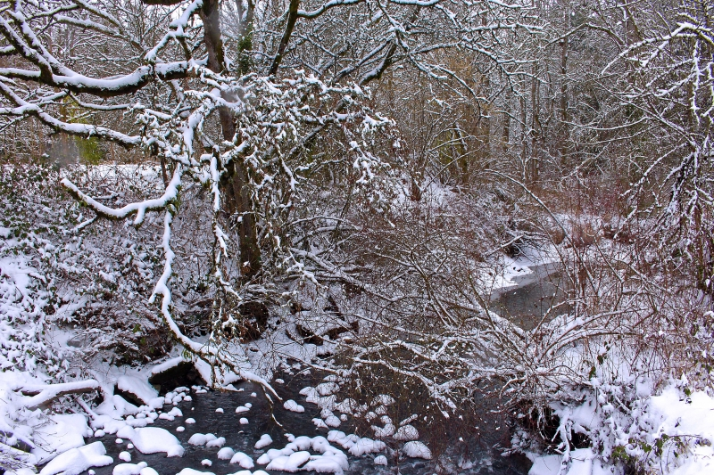 Stream In A Winter Snow Storm