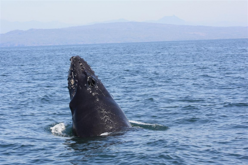 Whale In Mexico
