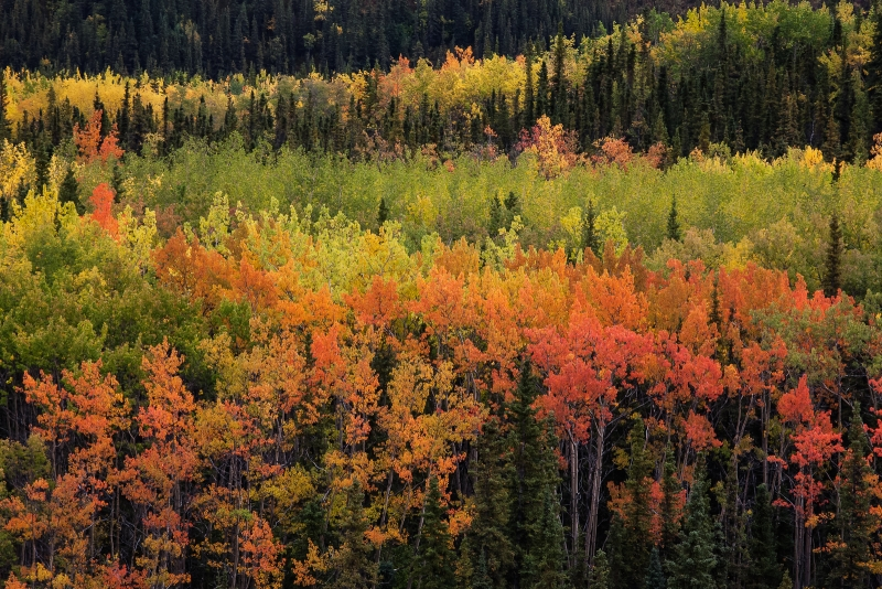 Fall In Denali National Park