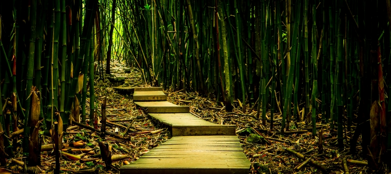Bamboo Trail, On Your Way To Waimoku Falls