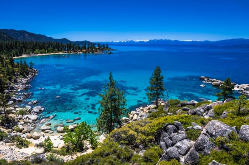 Lake Tahoe Summerscape