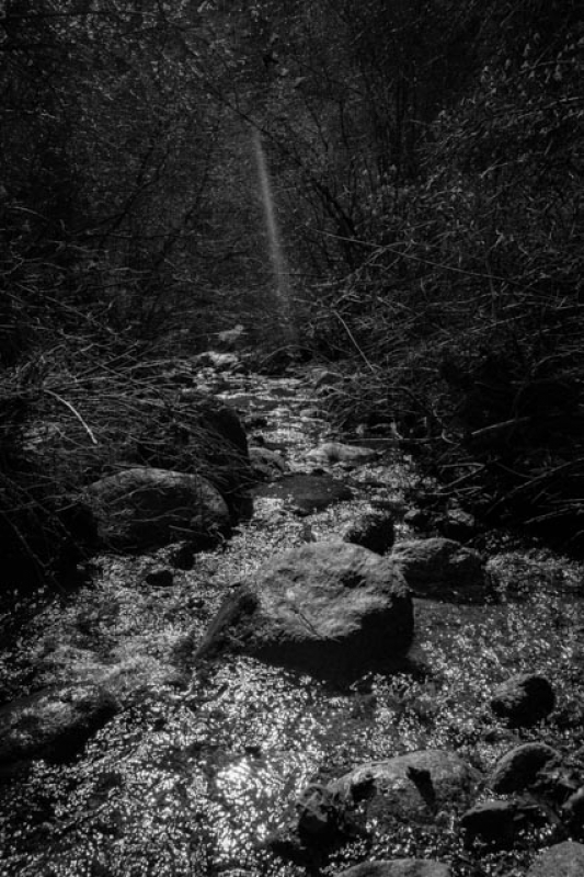 Ray Of Sun On The Creek