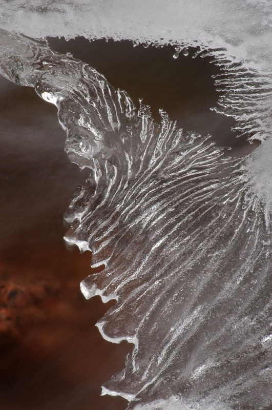 Ice Wing