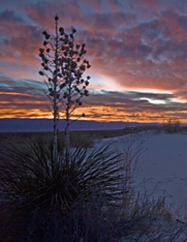 White Sands At Sunrise