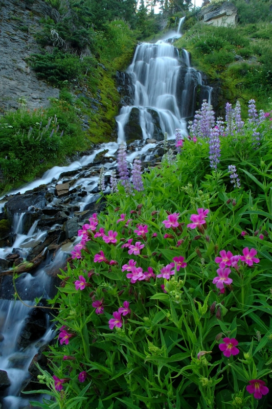 Vidae Falls And Flowers