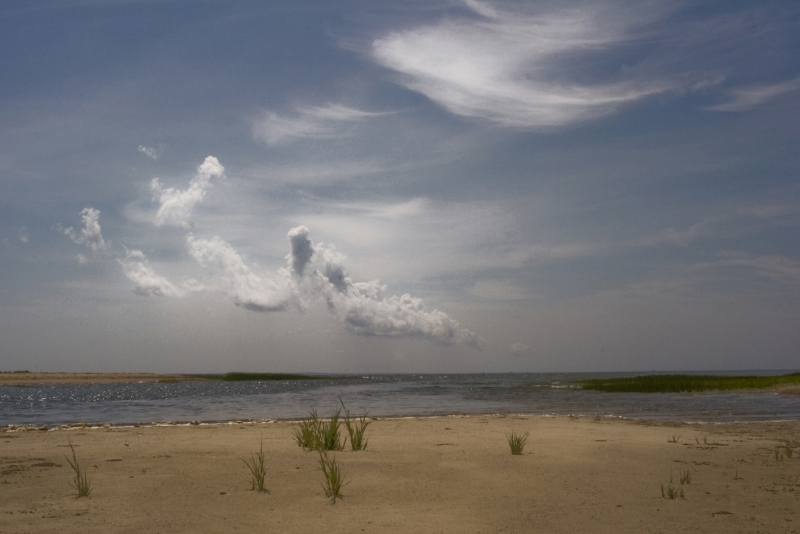 Wellfleet Shore