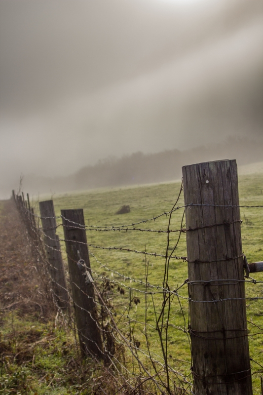 Foggy Fence Post