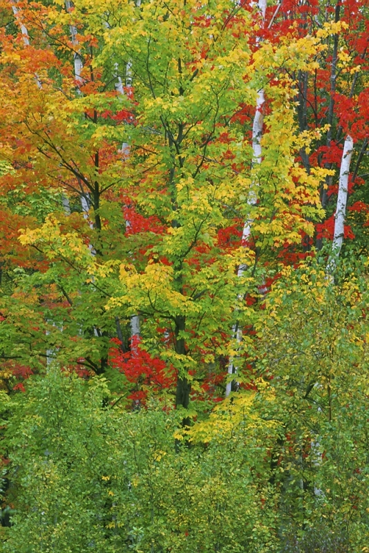 Fall Color, Itasca County, Mn.