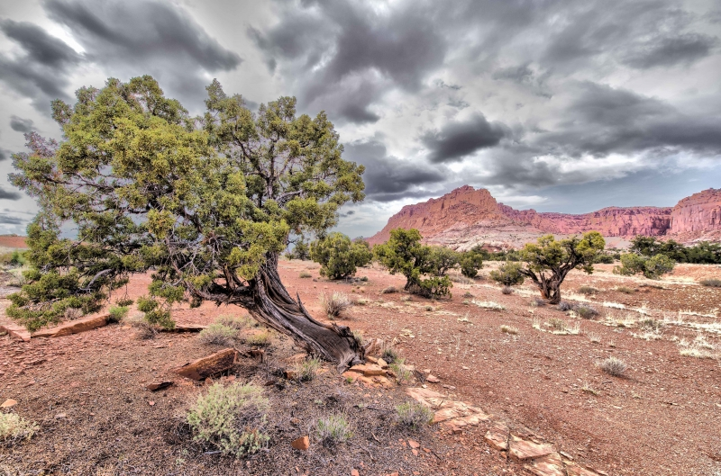 Dark Skies Over Capitol Reef National Park