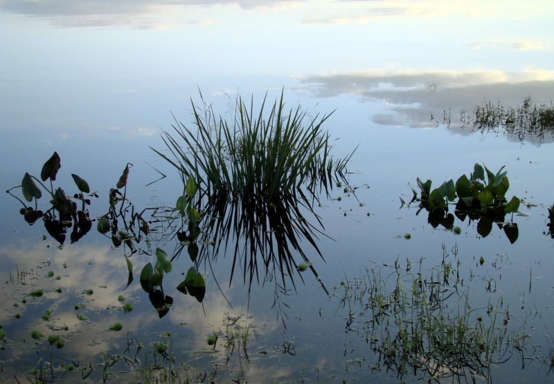 Chickahominy Reflection