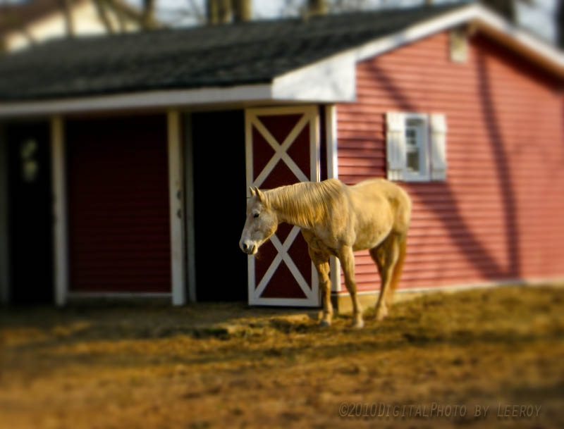 Horse At Home