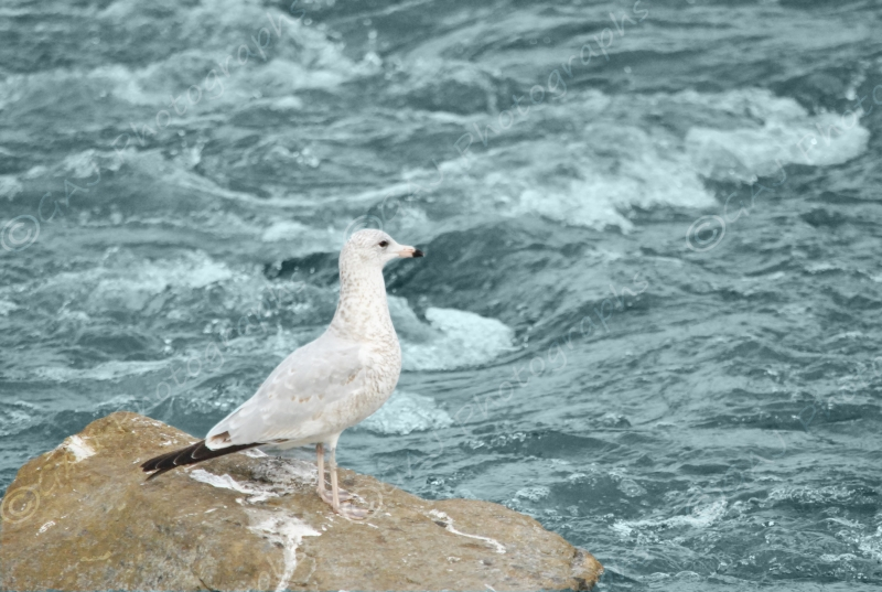 Seagull At The Lake