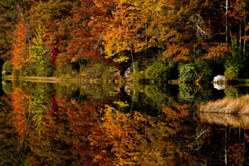 Fall Reflections Of Lake Trees