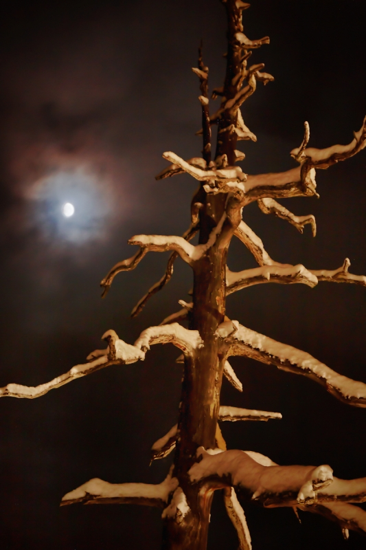 Branches In Moonlight