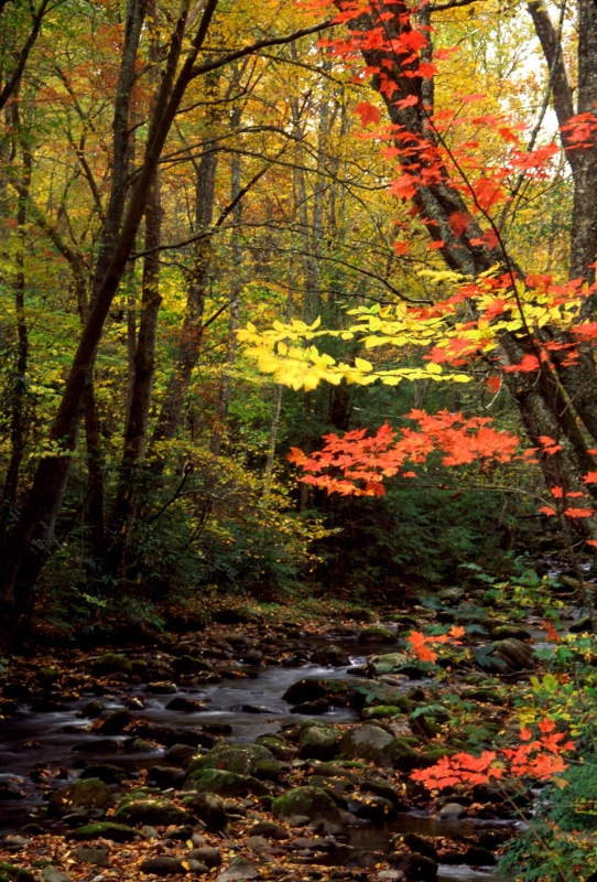 Cosby Creek In Color