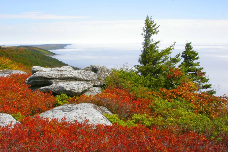Bear Rocks, Dolly Sods National Recreation Area