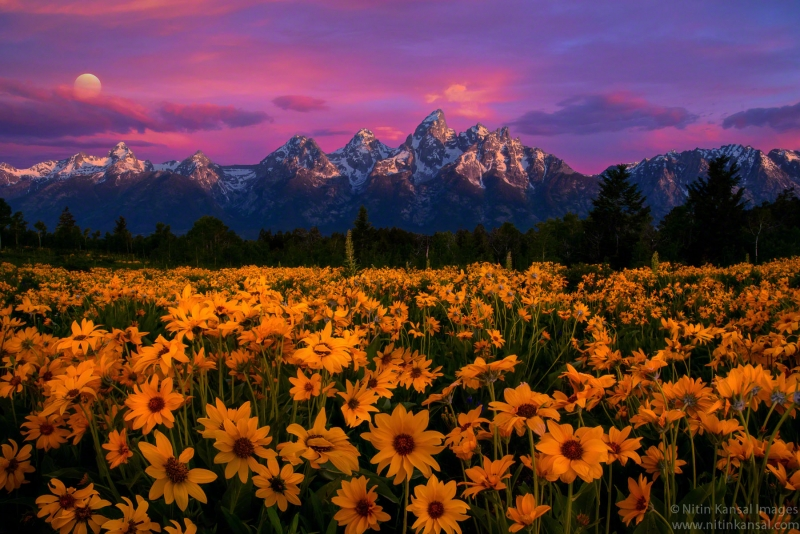 Tetons Magic
