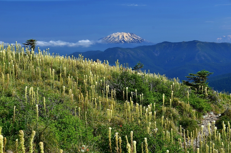 Mt. St. Helens As Seen From Silver Star Mountain