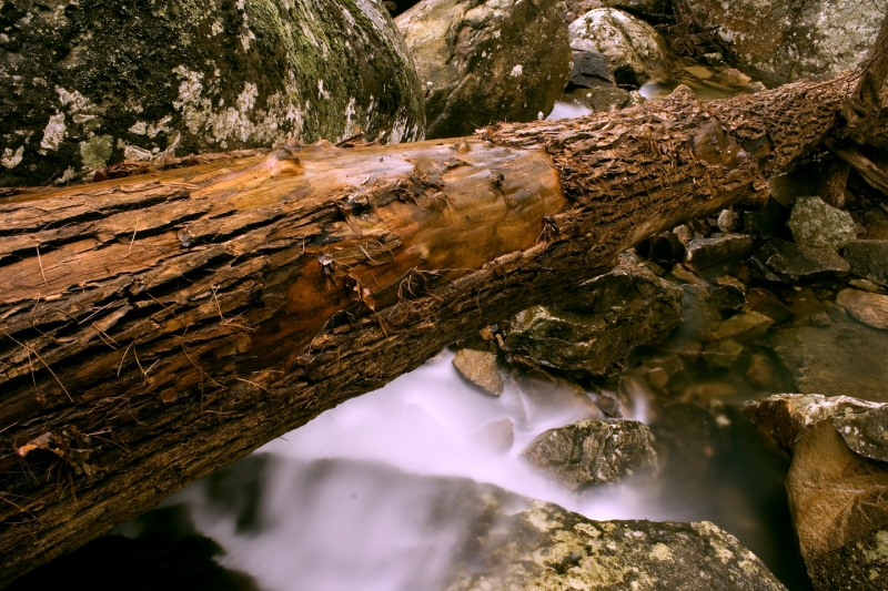 Fallen Log Over Creek
