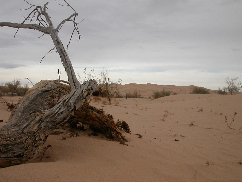 If A Tree Falls In The Desert
