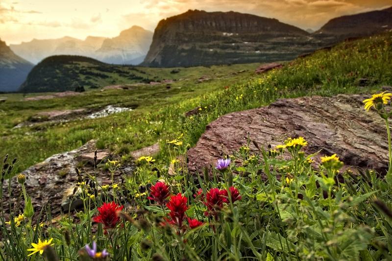 Glacier National Park Wildflowers