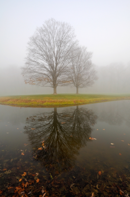 Reflection In The Fog