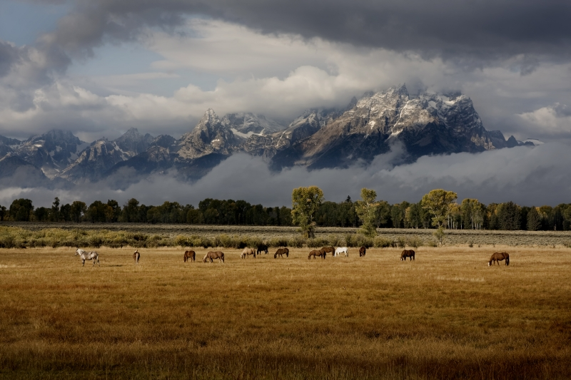 Horses And Tetons