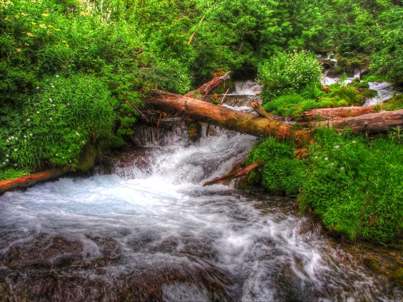 Cub River Headwaters