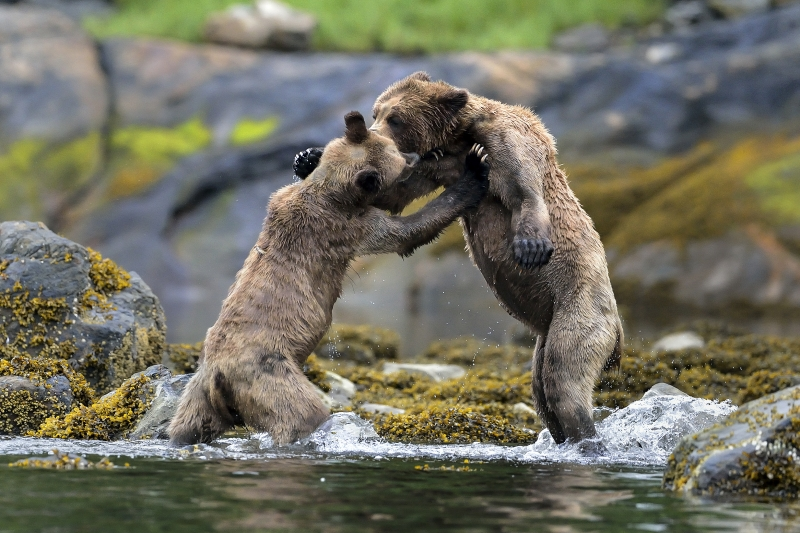 Bear Disagreement