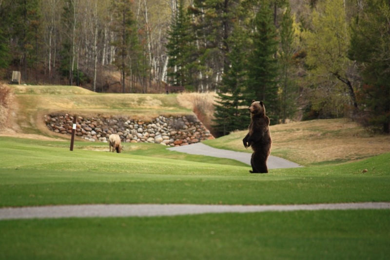 Golfing On The Wild Side