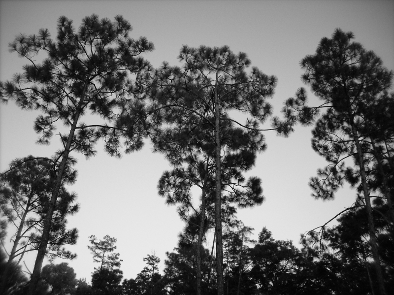 Trees In Black And White8