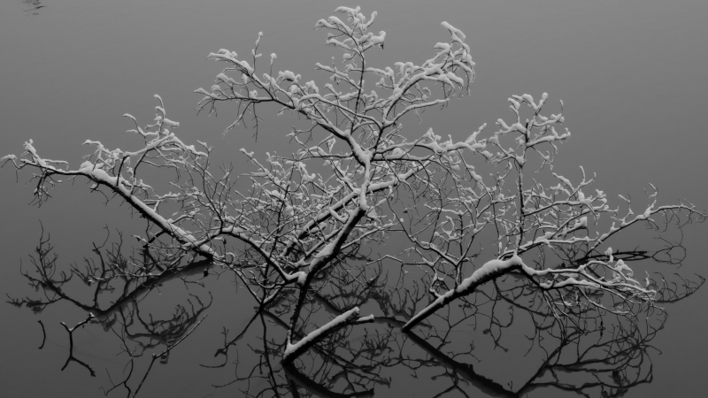 The Gray Of Winter