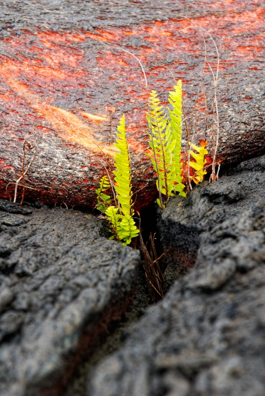Lava Burning Ferns