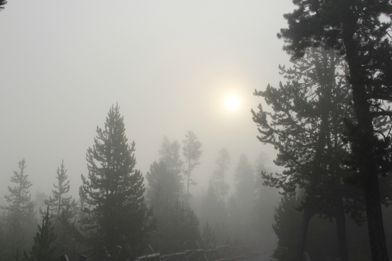 Yellowstone Morning Fog