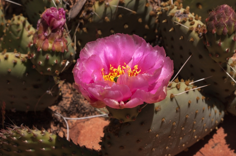 Pink Cactus Spotlighted