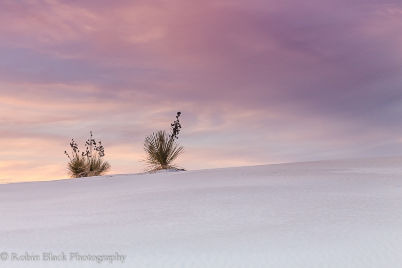 Yuccas At Sunset, White Sands National Monument