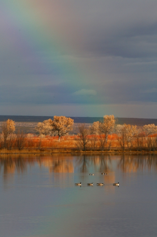 Rainbow Over The Fall Marsh