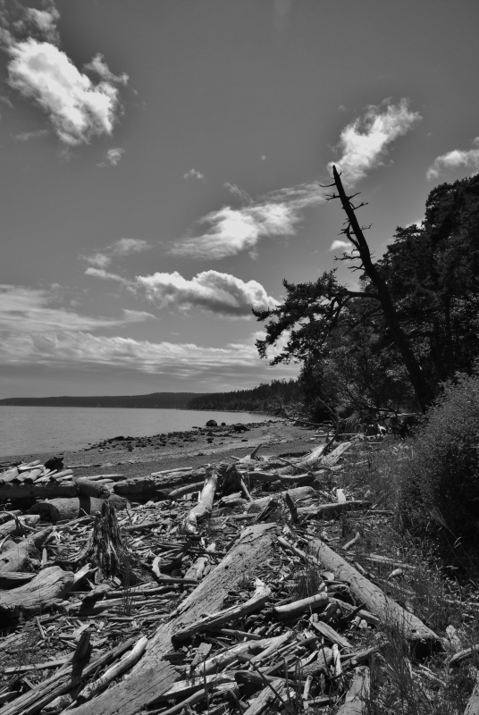 Coastline At Spencer Spit, Lopez Island