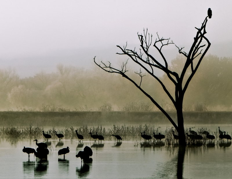 Bald Eagles Misty Morning View