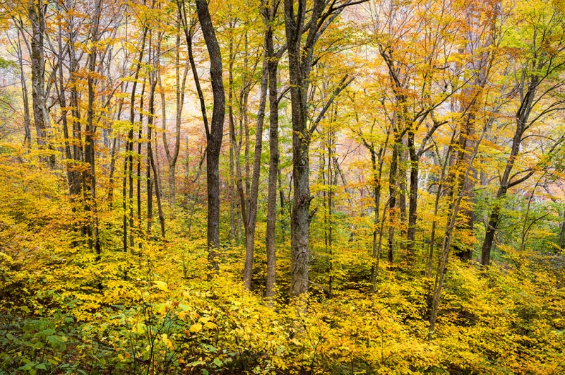 Western Nc Fall Foliage – The Forest For The Trees