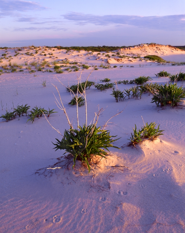 Dunes At Early Light