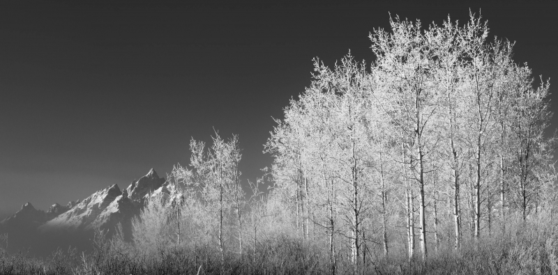 Aspens At 15 Below