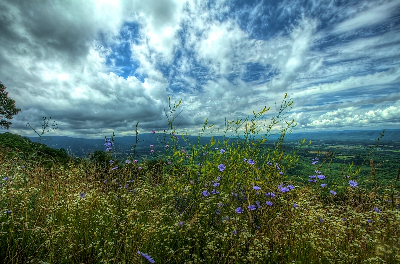 Wildflowers In Shenandoah Np
